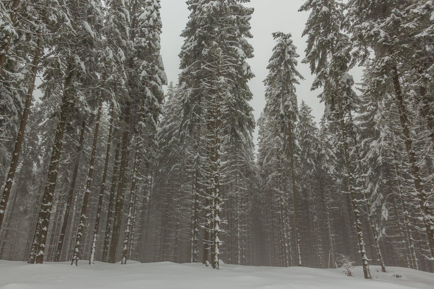 landscape winter mountains snow fog photography photo canvas wallpaper nature trees frame view , Comșa Bogdan