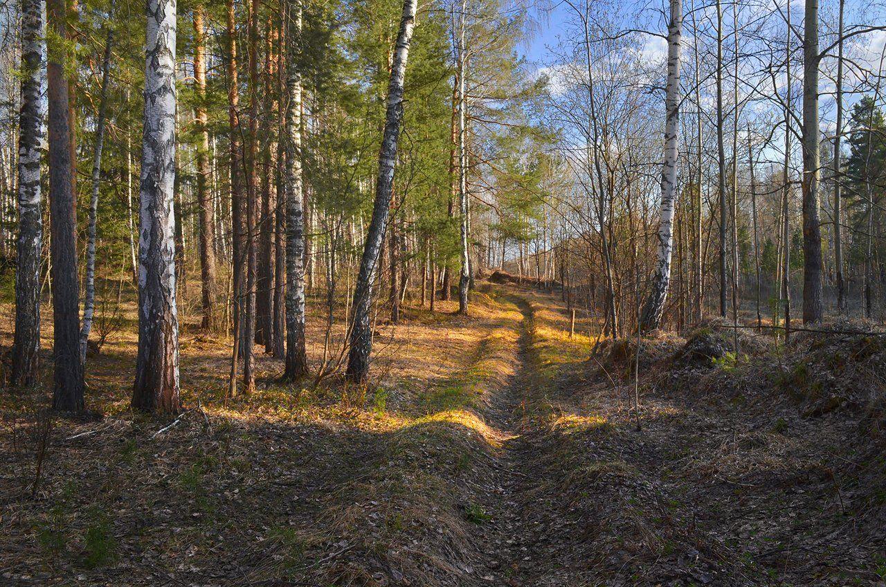 лес, тёплый вечер, солнечный свет, дорога, весна, Irina Shapronova