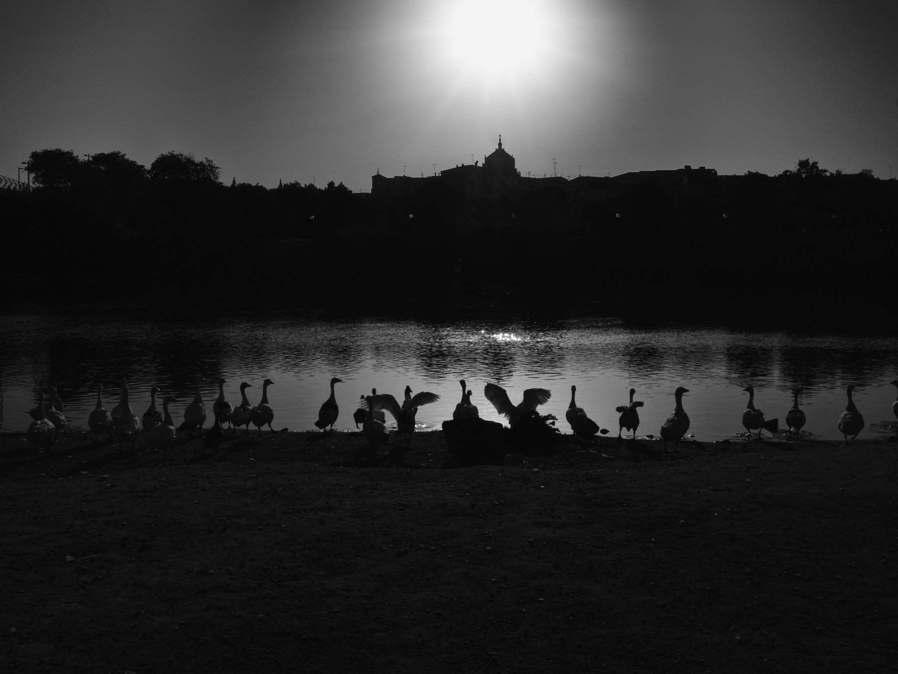 Spain, Toledo, Monochrome, Black and white, Birds, Sunset, Elena Beregatnova
