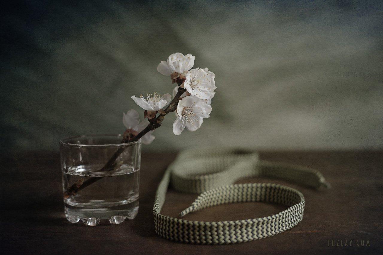 цветки абрикоса, шнурок, весна в стакане, Владимир Тузлай