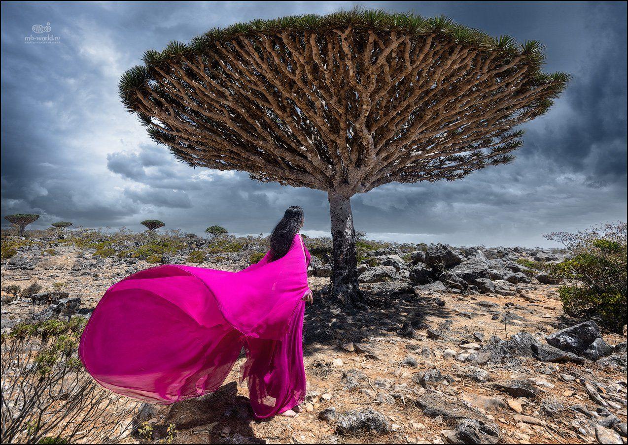 Йемен, Сокотра, пейзаж, Mikhail Vorobyev