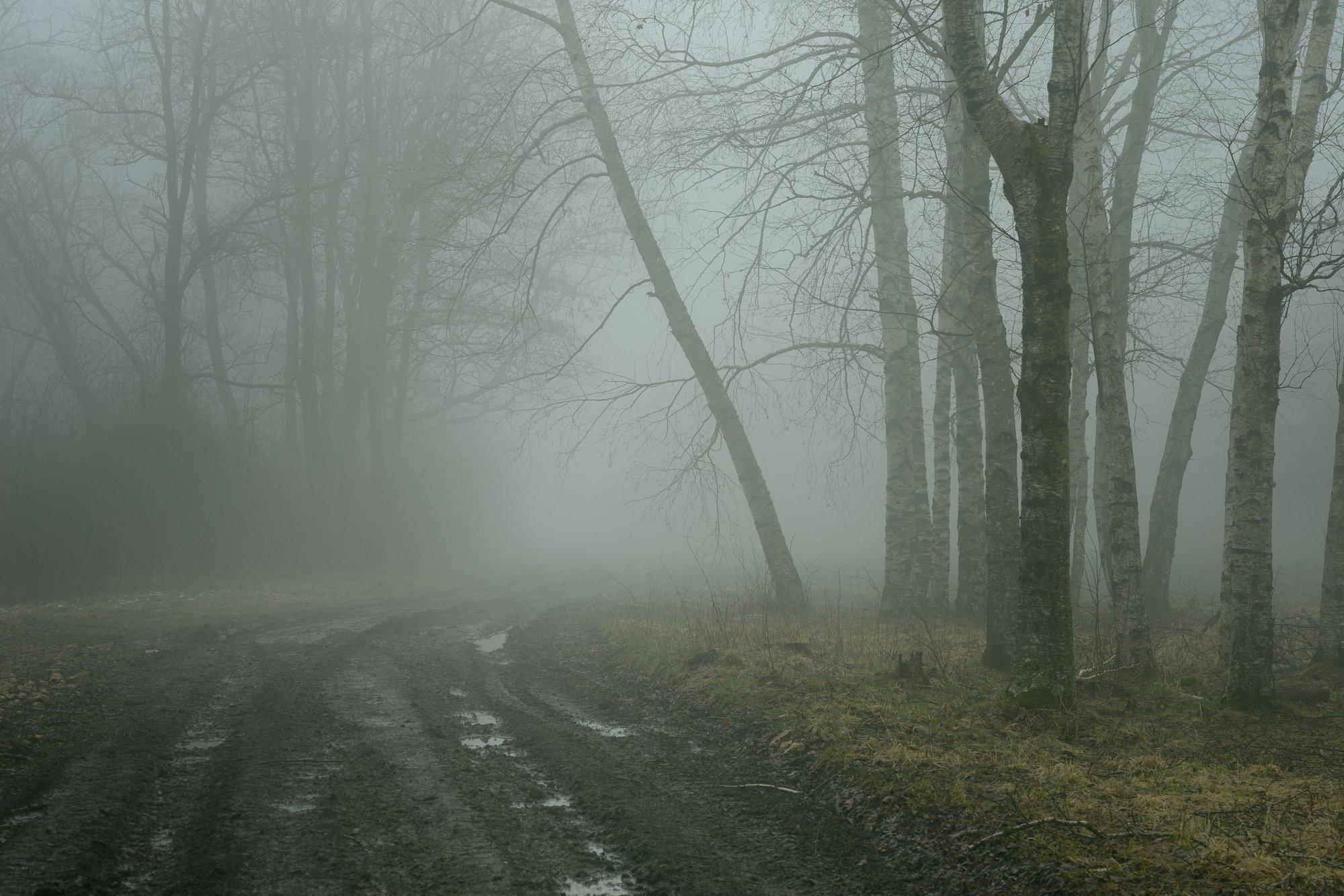 роща туман утро дорога, Александр Жарников