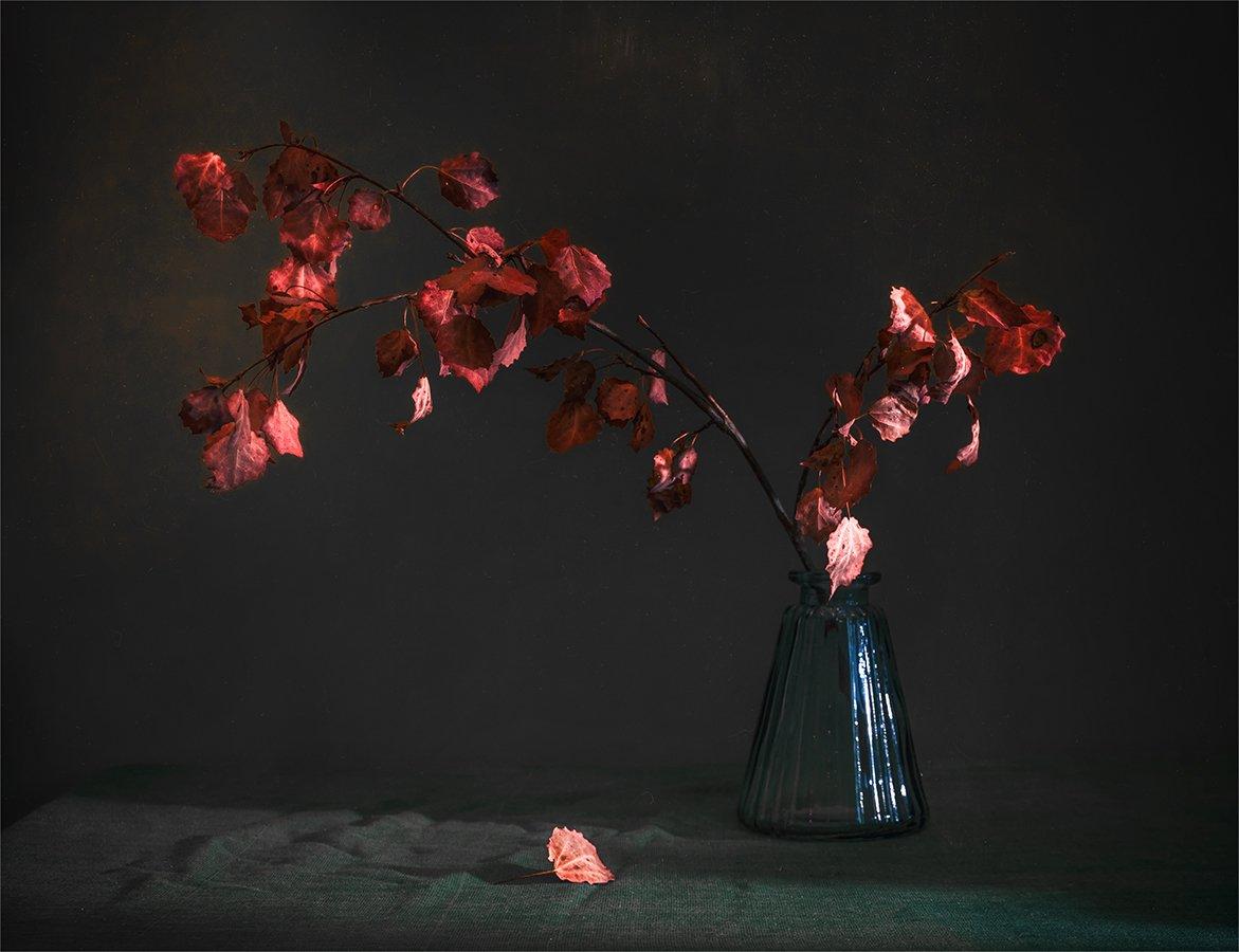 still life, натюрморт,    винтаж,   минимализм, ветка, дерево, береза, листья, осенние листья, осень,свет, тень,, Шерман Михаил