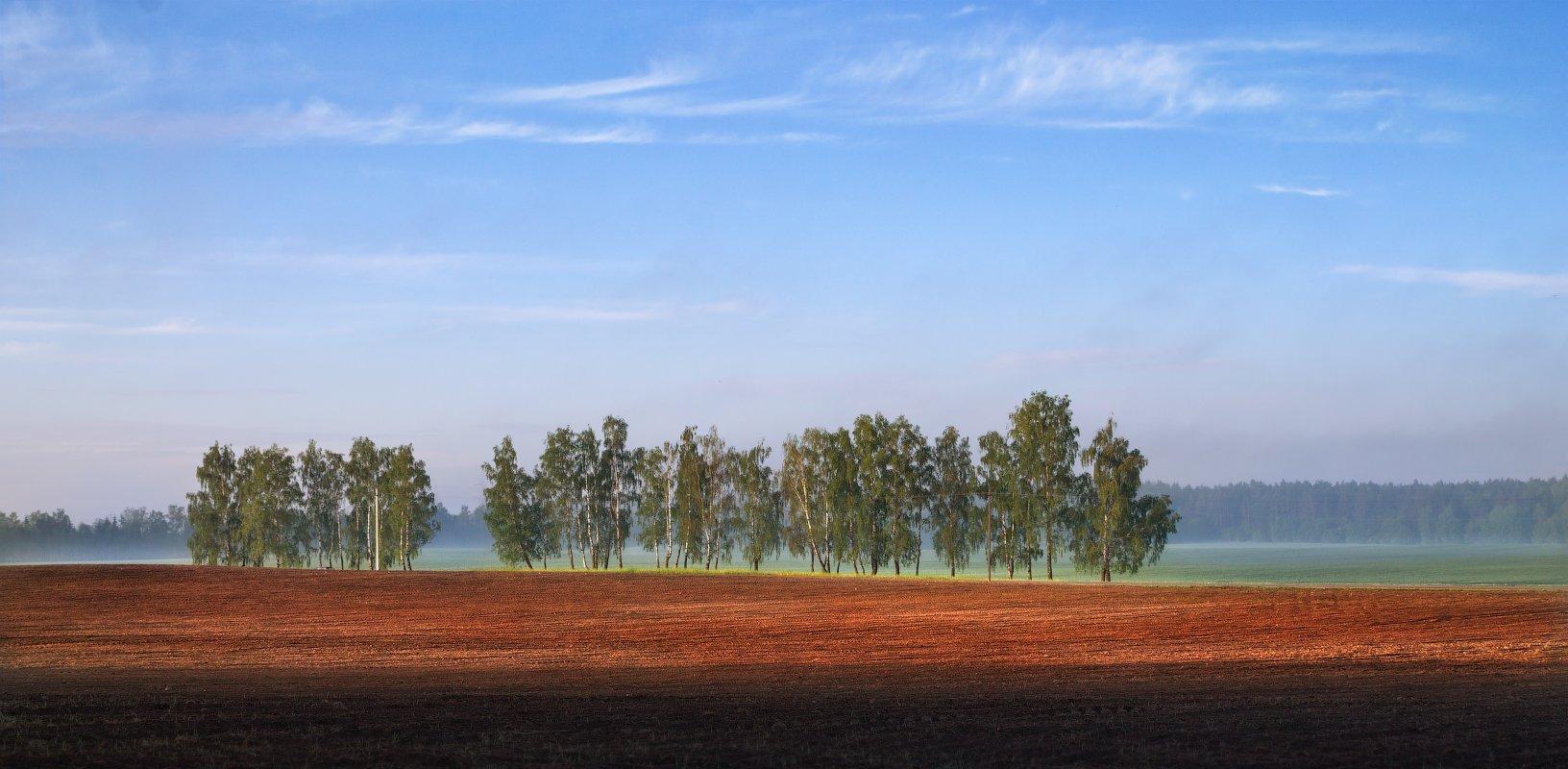 утро, поле, деревья,, Сергей Шабуневич