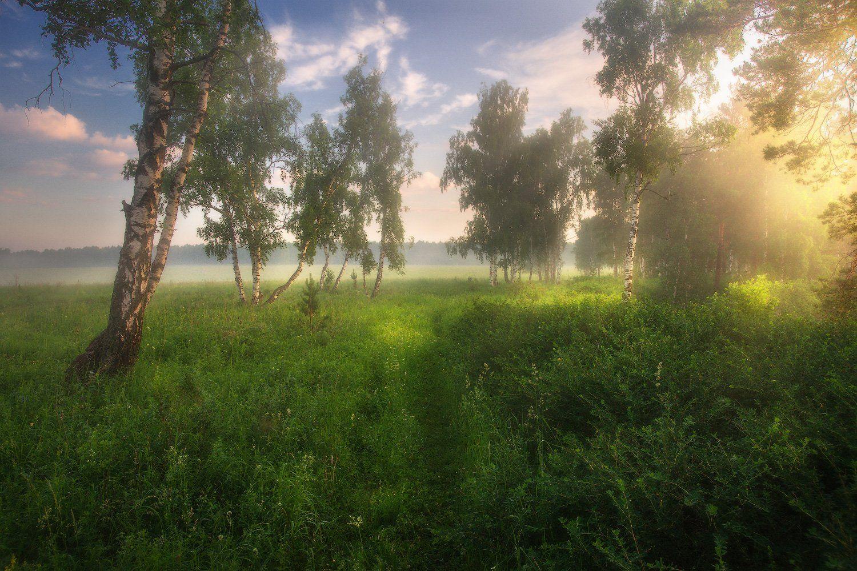 лето, березы, природа, урал, Владимир Ляпин