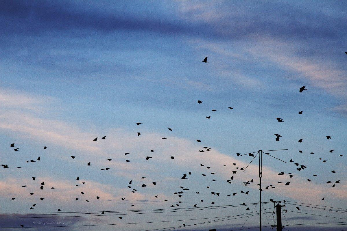 осень, небо, птицы, Андрей Ларионов