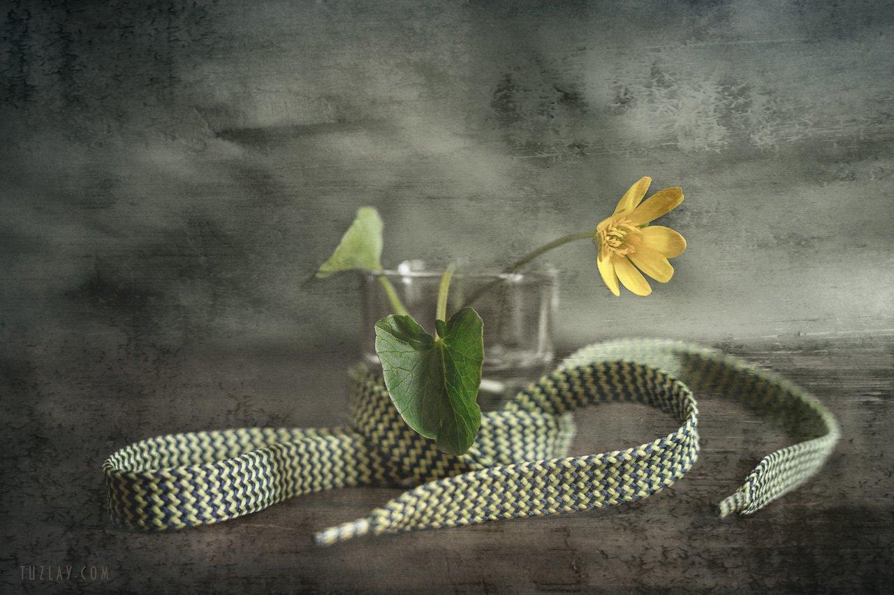 весна в стакане, желтый цветок, шнурок, Владимир Тузлай