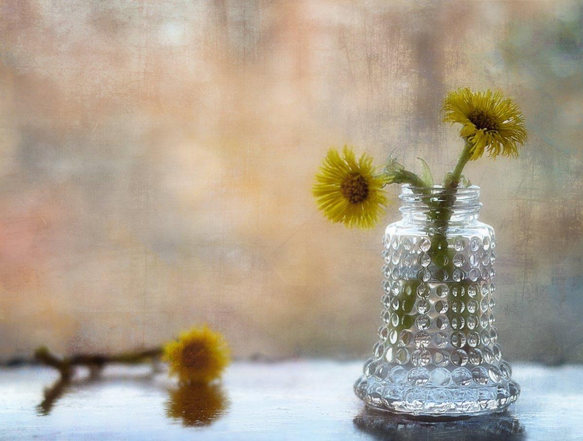 натюрморт,первоцветы,мать-мачеха,весна,цветы, Наталия К