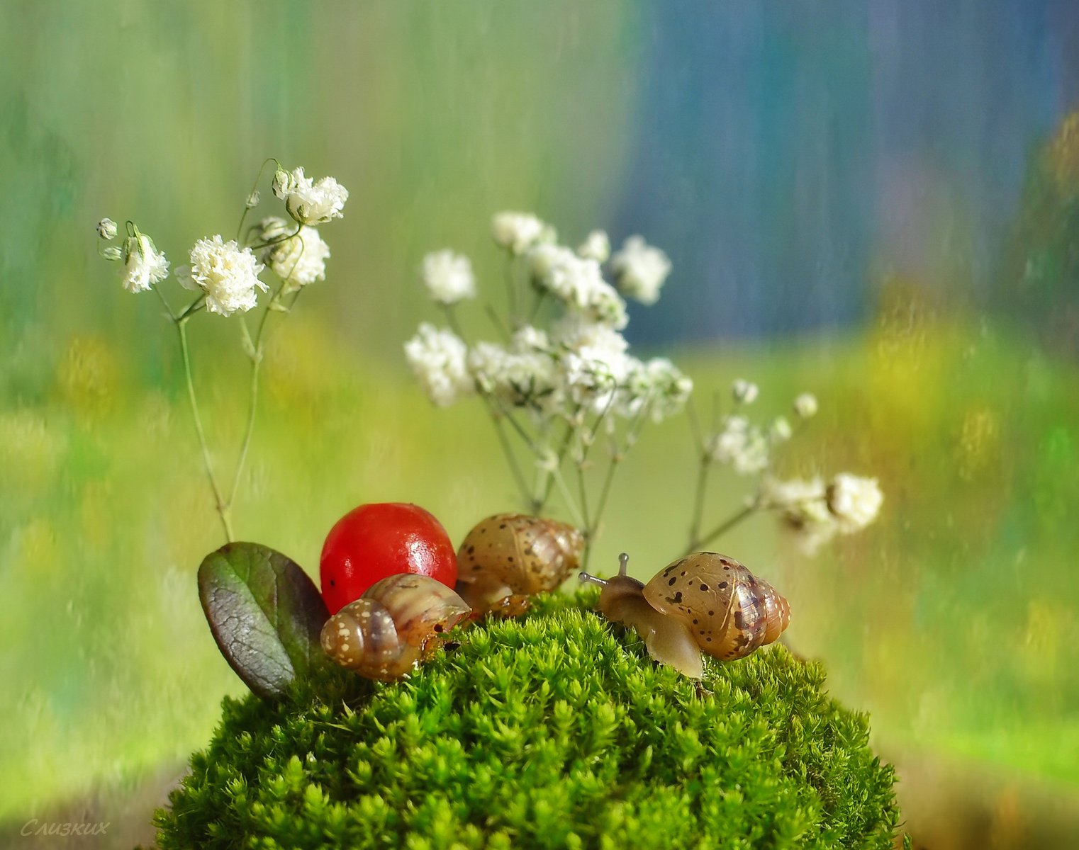 этюд,свет,улитки,мох,ягода, Инаида