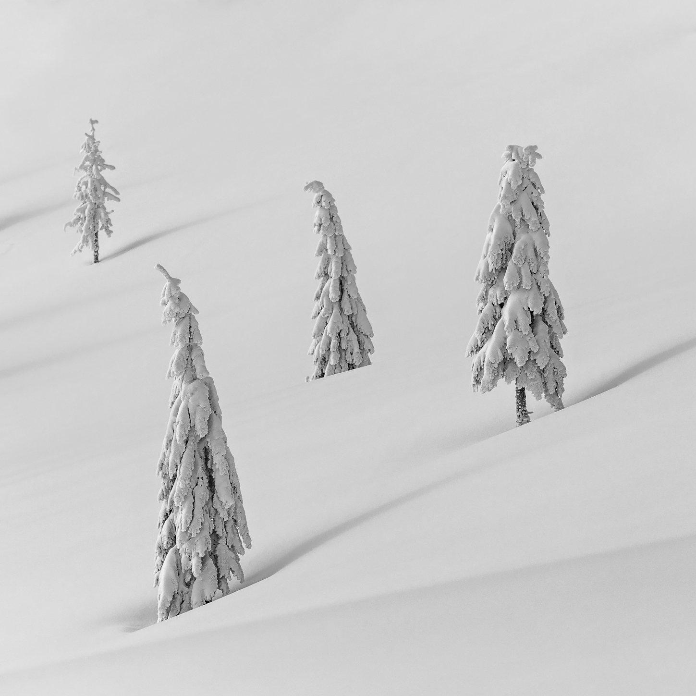 winter, trees, snow, landscape, travel, nature, mountain, romania, cold, vladeasa, Lazar Ioan Ovidiu