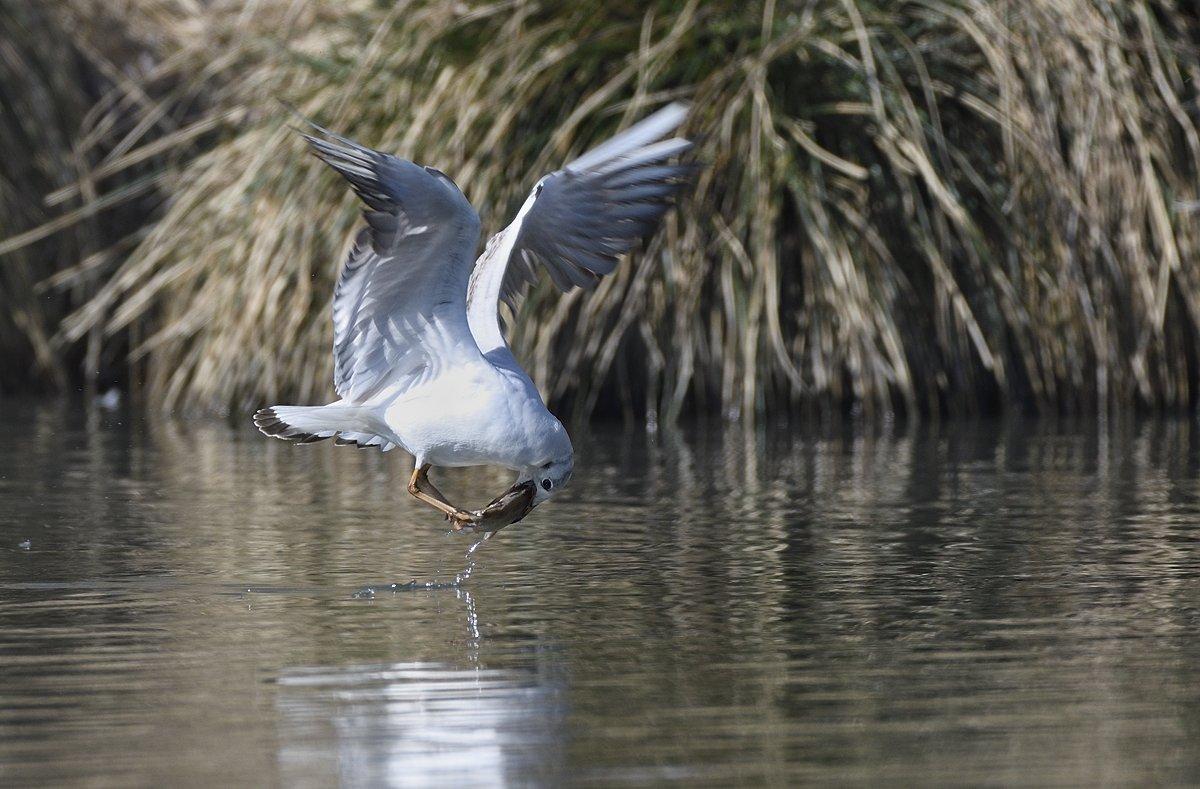 птицы birds slovakia, Jaroslav Mego