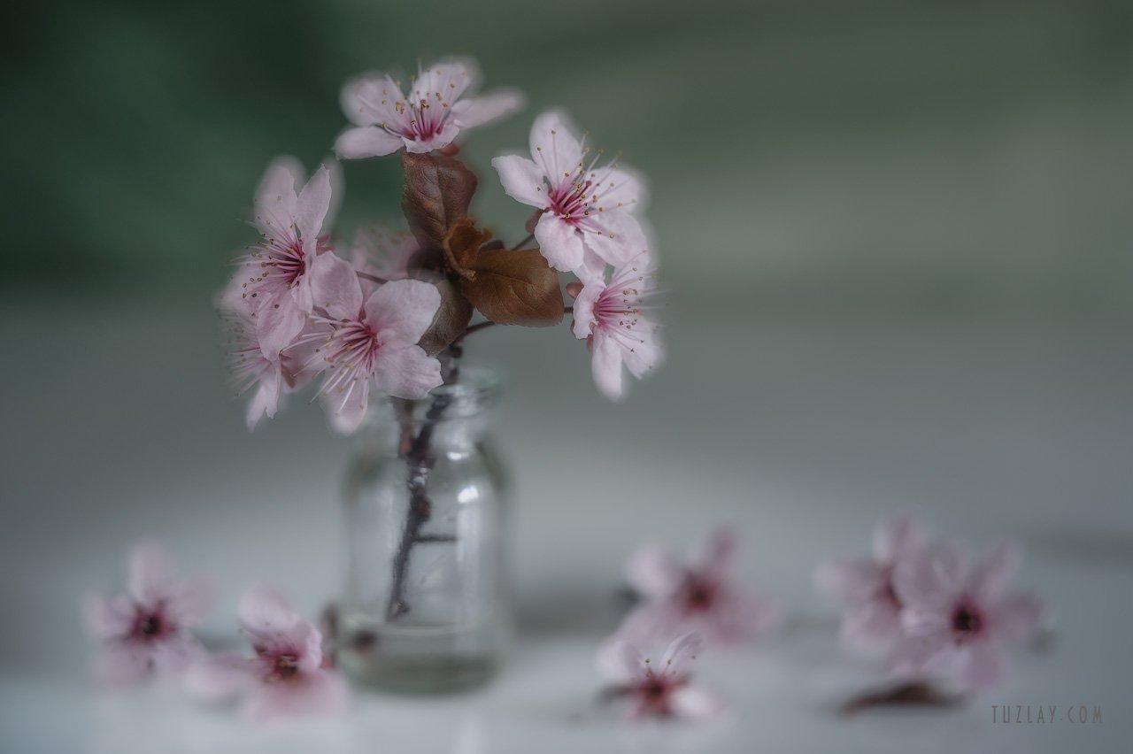розовые цветки, весна во флаконе, Владимир Тузлай