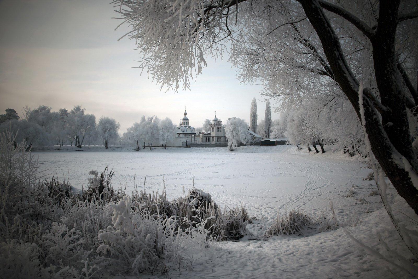 gomel belarus winter snow гомель беларусь зима снег дерево, Иванчиков Дмитрий