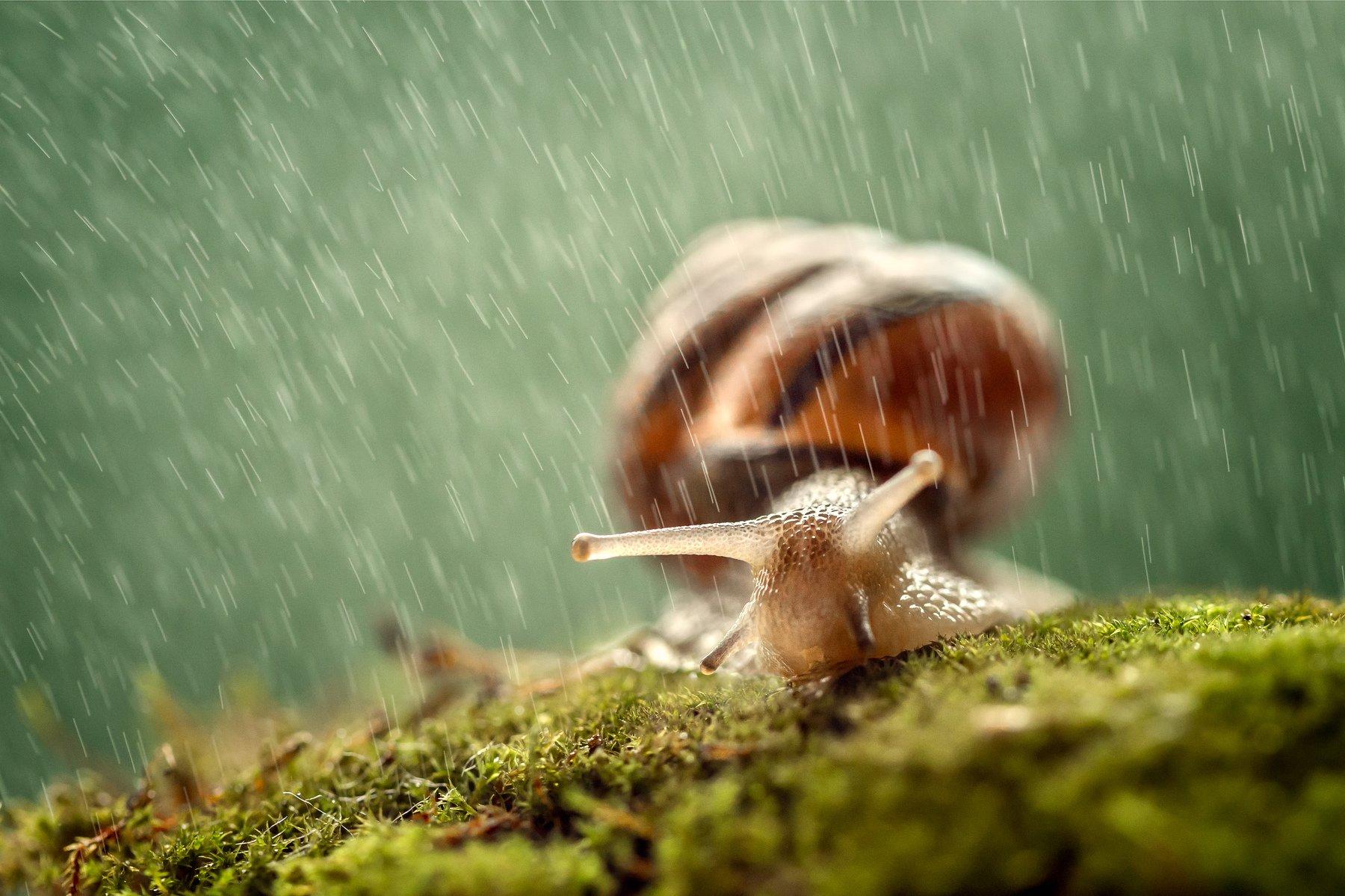 улитка, дождь, капли, непогода, макро, ракушка, Татьяна Тетерева