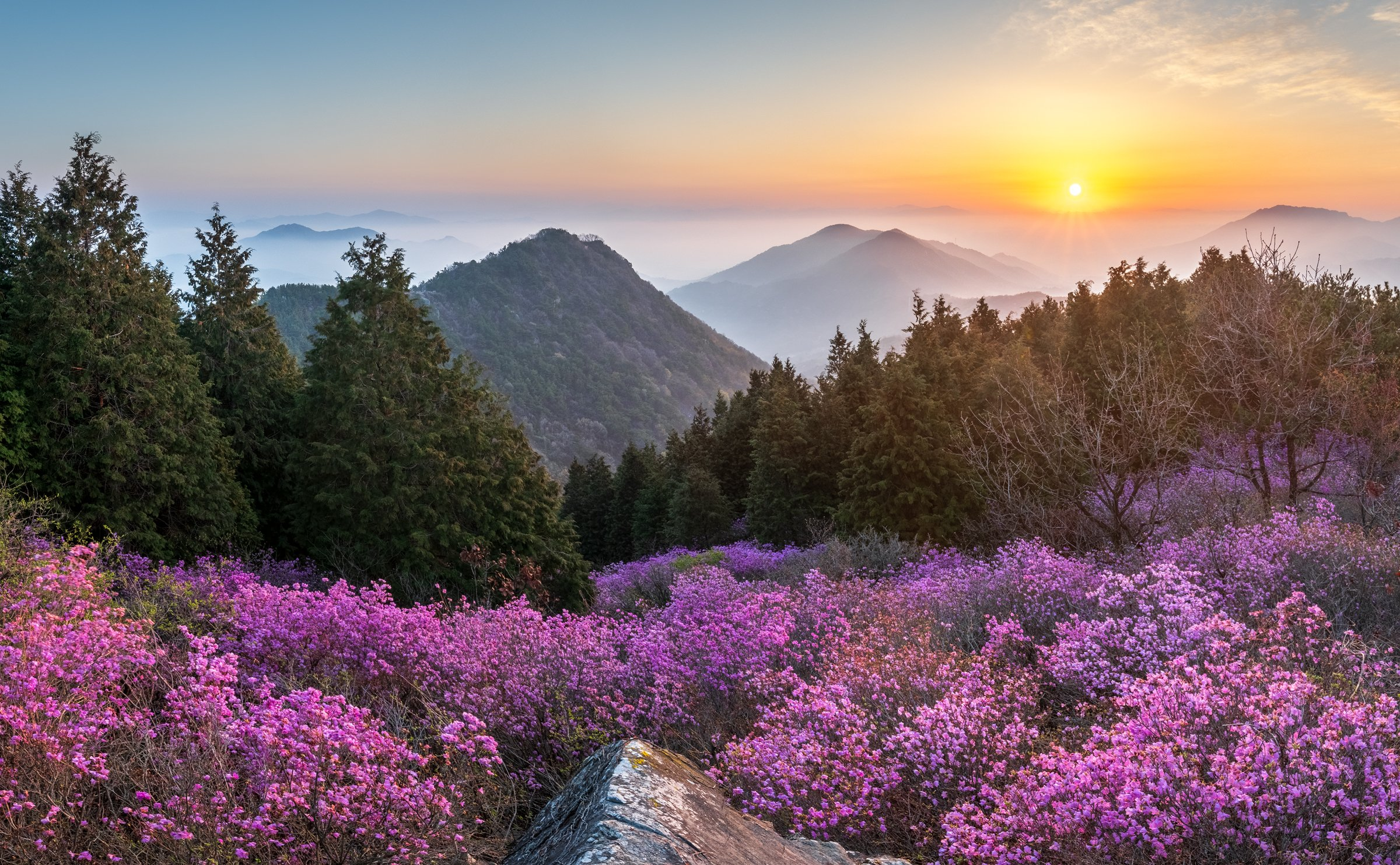 mountains,peak,hiking,fog,spring,blossom, 류재윤