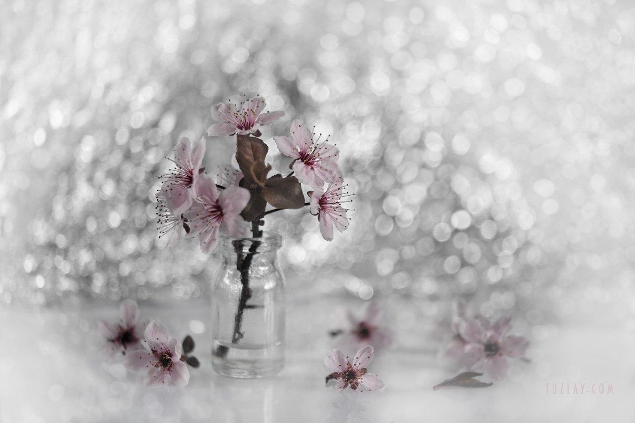 весна во флаконе, пузырек, розовые цветки, боке, bokeh, Владимир Тузлай