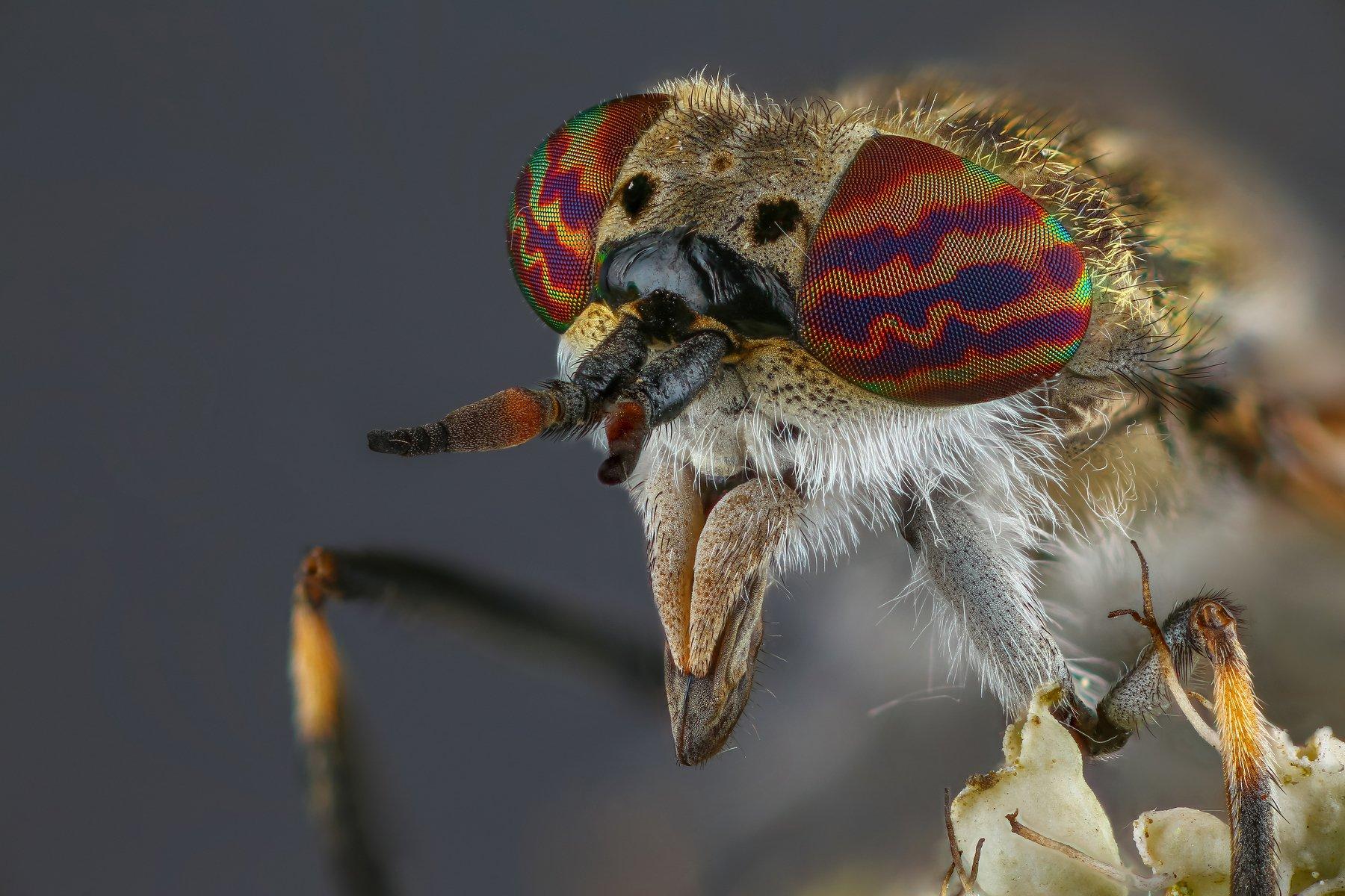 макро муха насекомое животное серый, Шаповалов Андрей