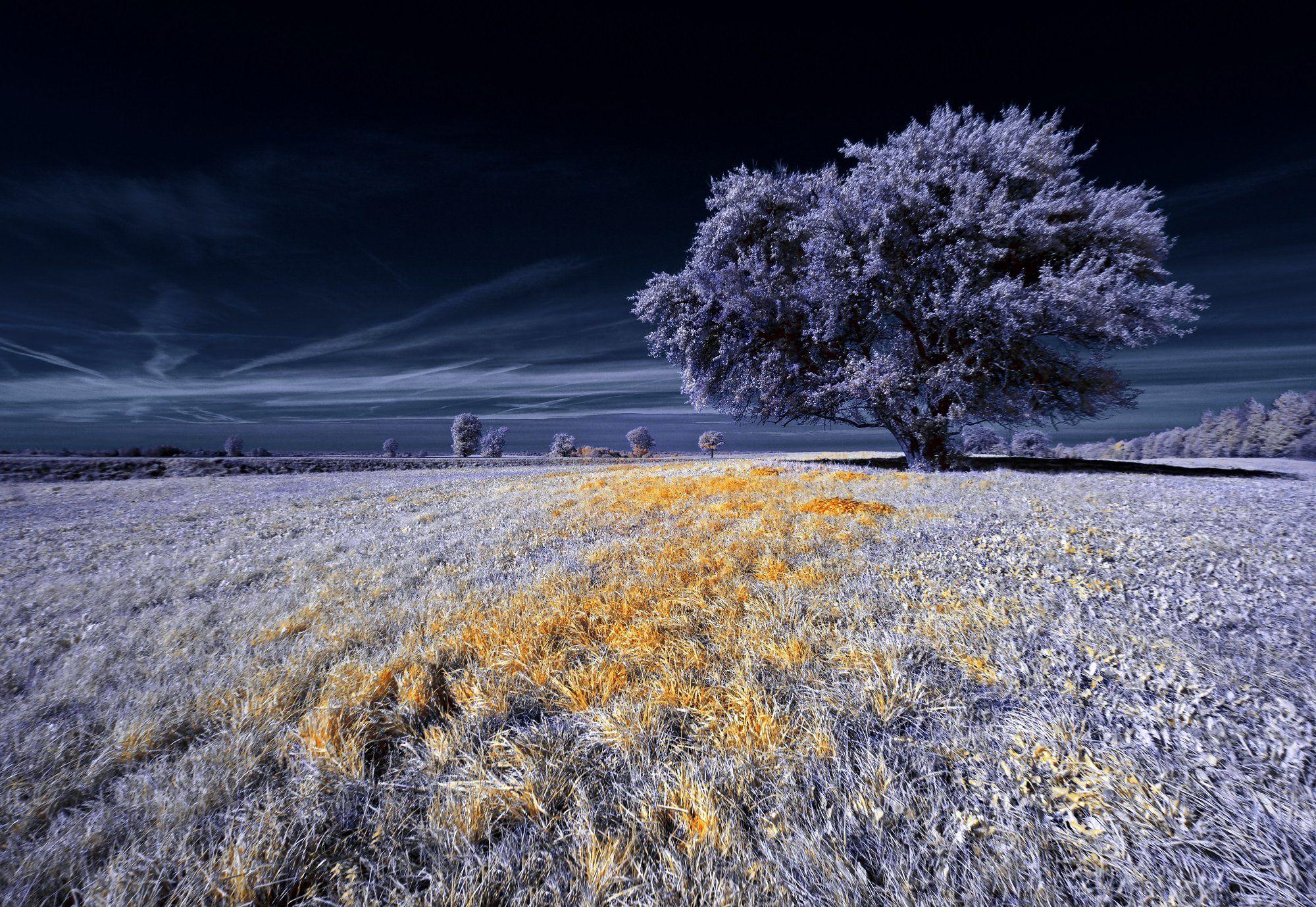 infrared,ик-фото,инфракрасное фото, инфракрасная фотография, пейзаж, осень, беларусь, Sixten ( Сергей )
