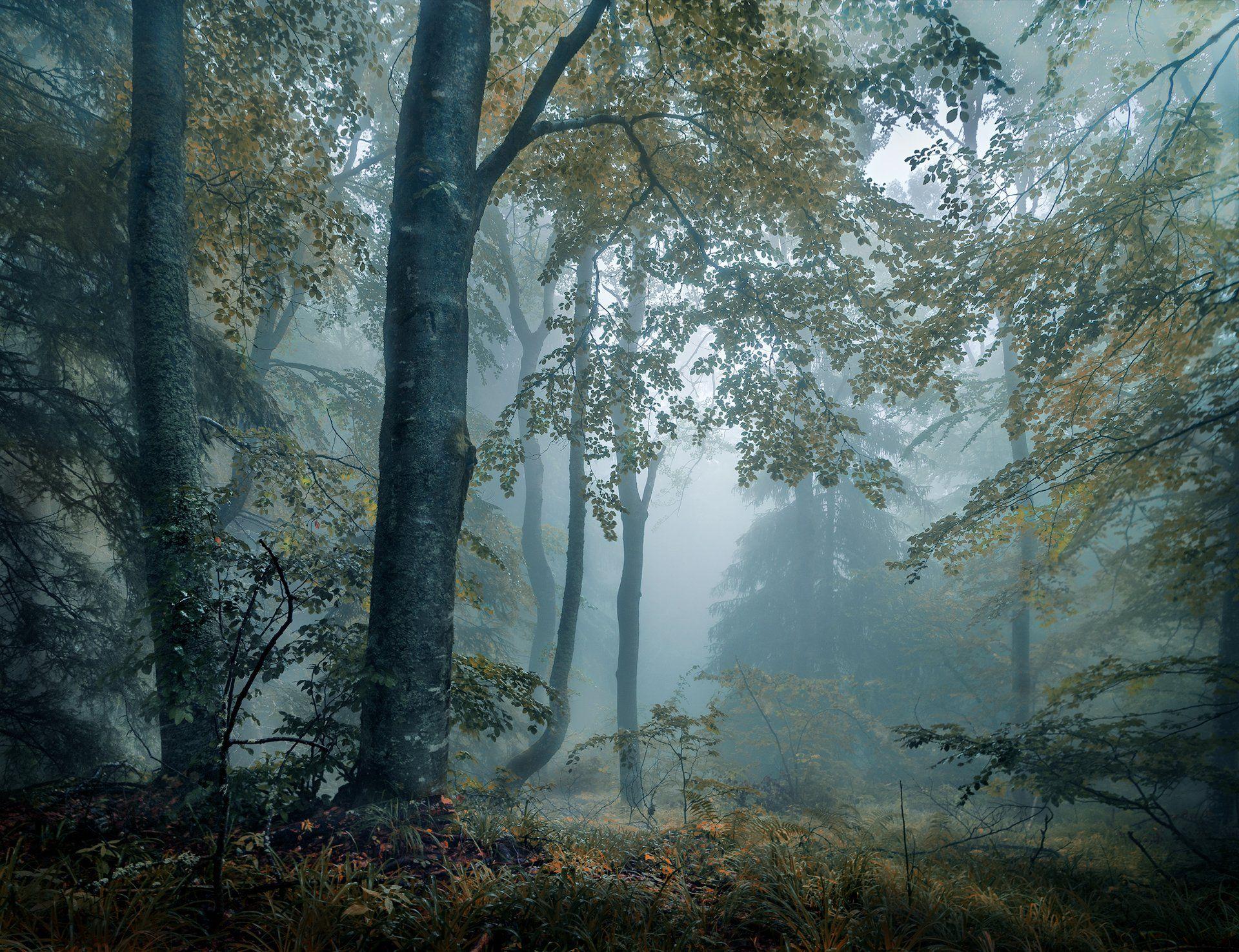 landscape nature scenery forest wood  mist misty fog foggy longexposure mountain vitosha bulgaria туман лес, Александров Александър