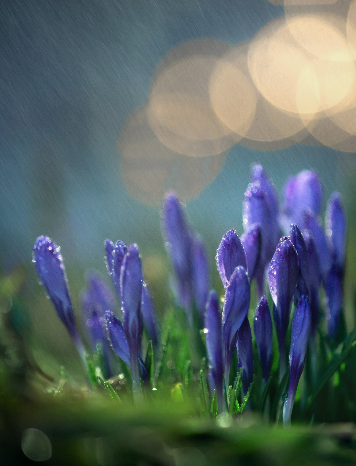 макро, природа, капля, вода, цветы, весна, красота, волшебство, Татьяна Пименкова