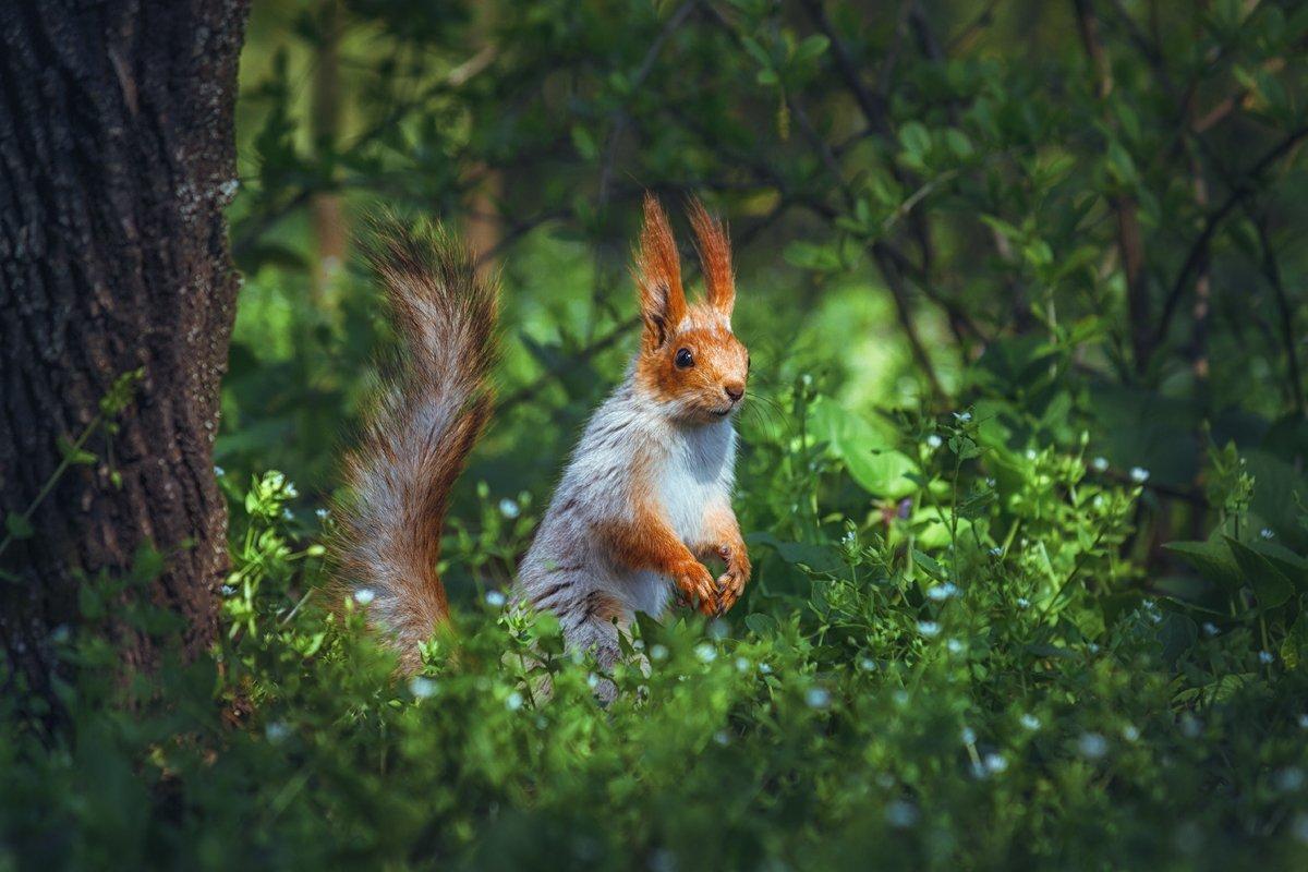 moment, момент, beautiful, красивый,  nature, природа, canon 55-250,  animal, животное,  forest, лесное, red, рыжая, squirrel, белка,  greenery, зелень,  spring, весенняя, joy, радость,, Терентьева Наталья