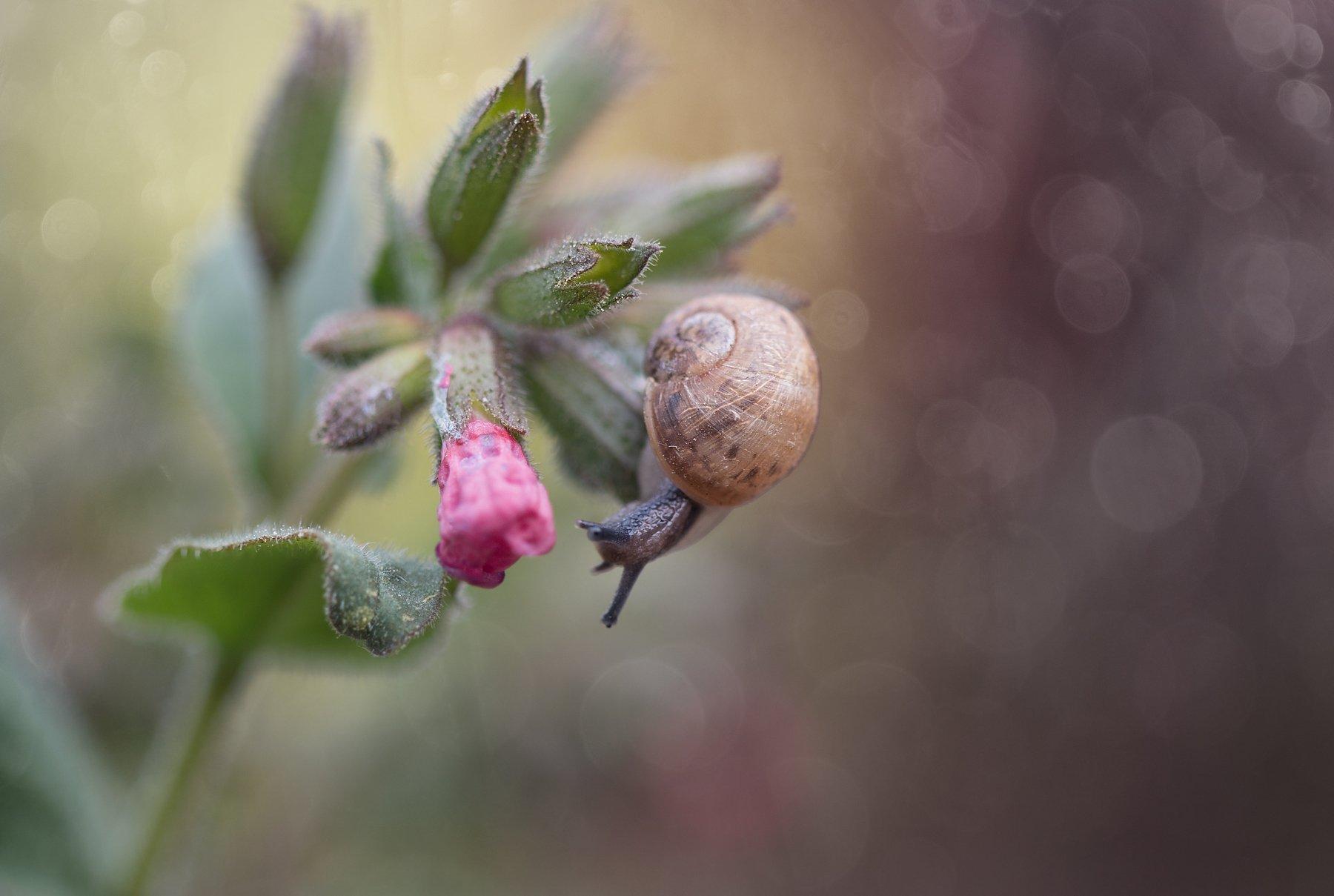 улитка, макро, красота, природа, цветы, весна, snail, spring, macro, nature, Гудина Людмила