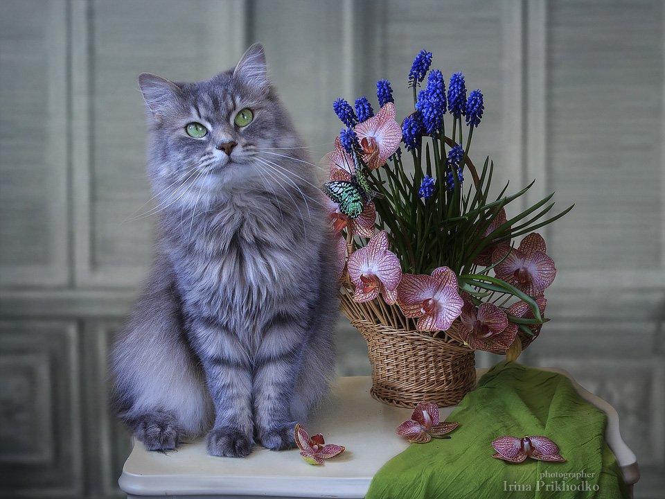 Уж если я не красавица, то все коты зажрались! Ирина Приходько