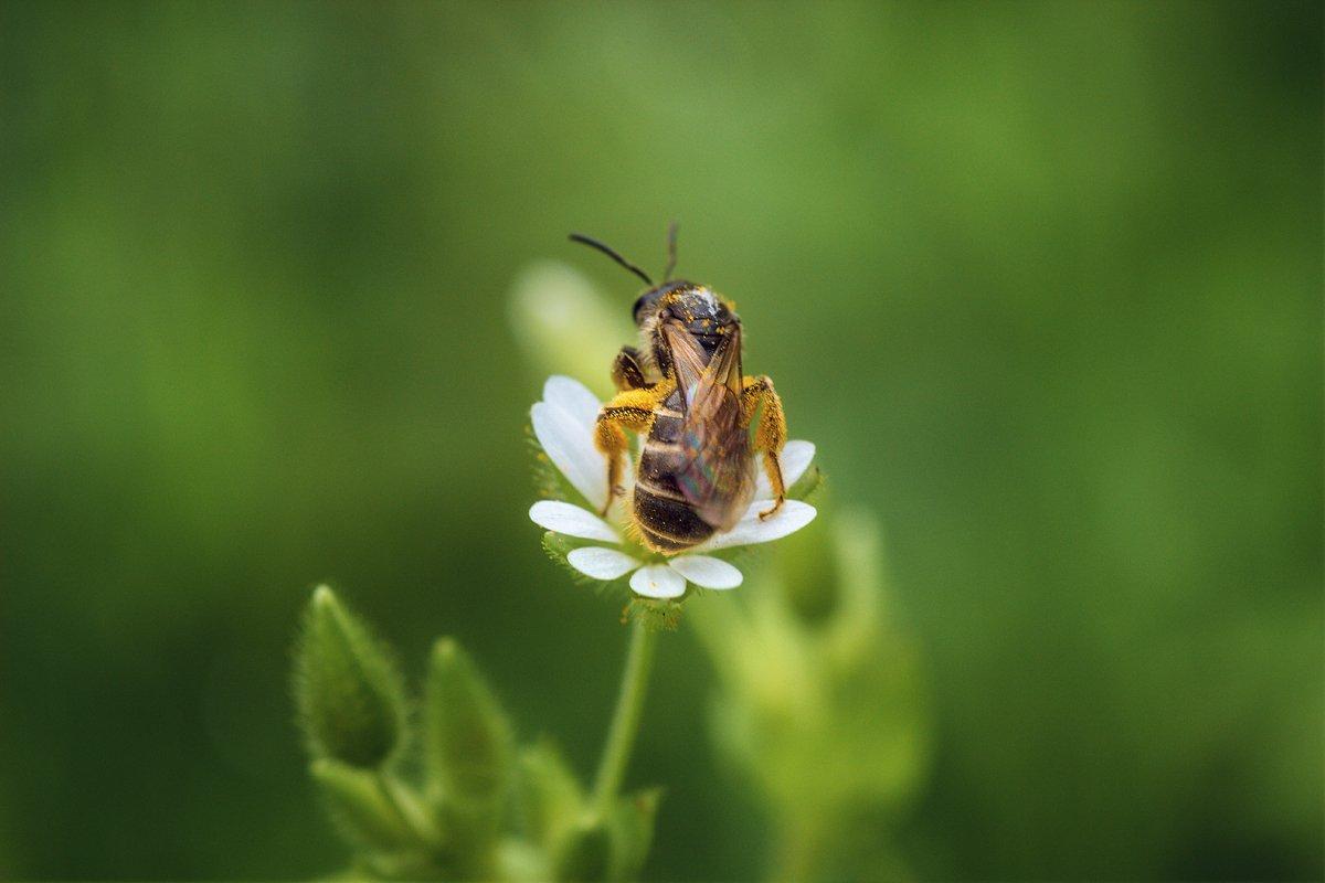 moment, момент, beautiful, красивый, nature, природа, macro, макро, macro lens, tokina 100 macro, flower, цветок, spring, весенний, insect, насекомое, pollen, пыльца, pollination, опыление,, Терентьева Наталья