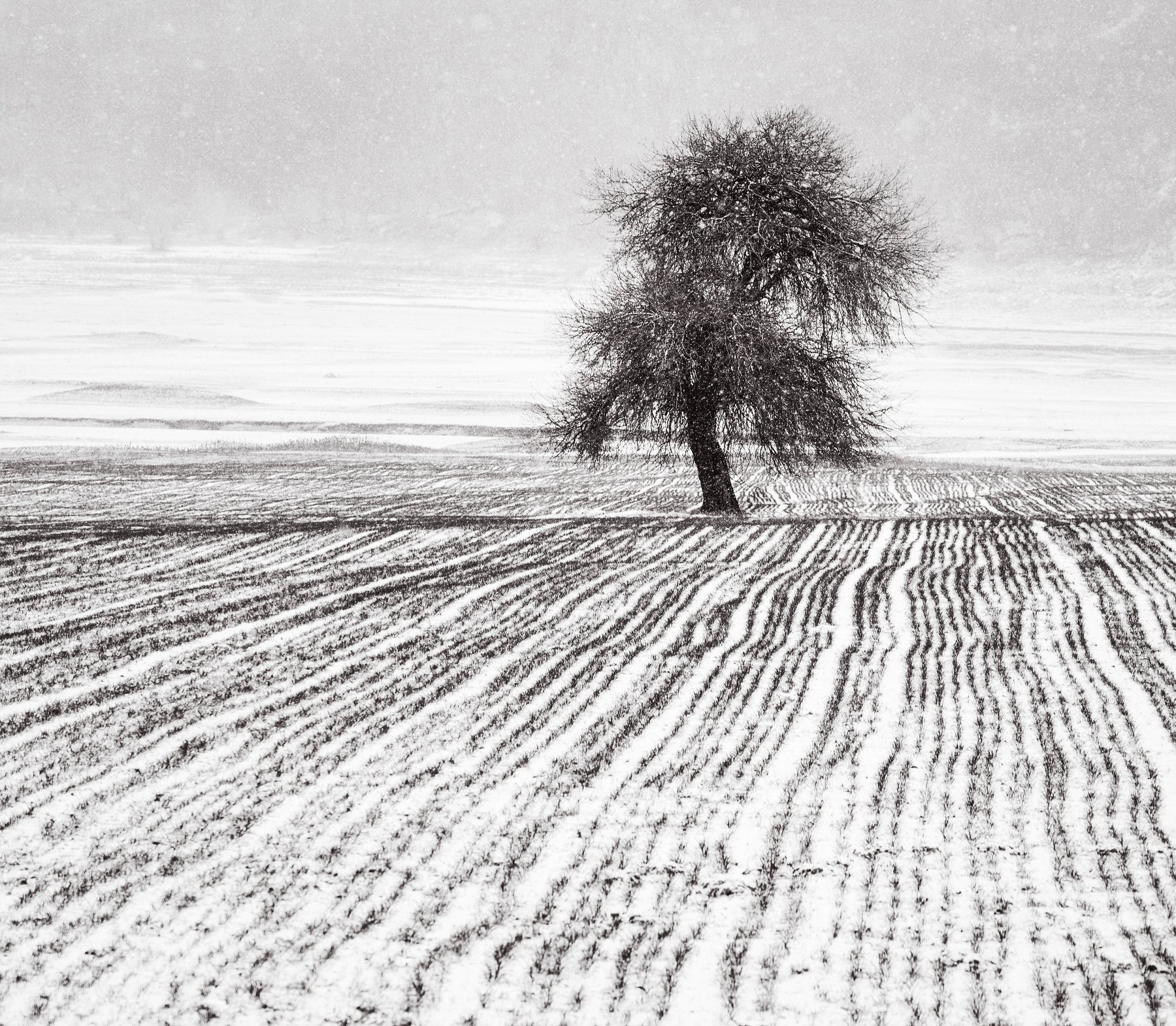 three , alone, snow, Radoslav Sviretsov