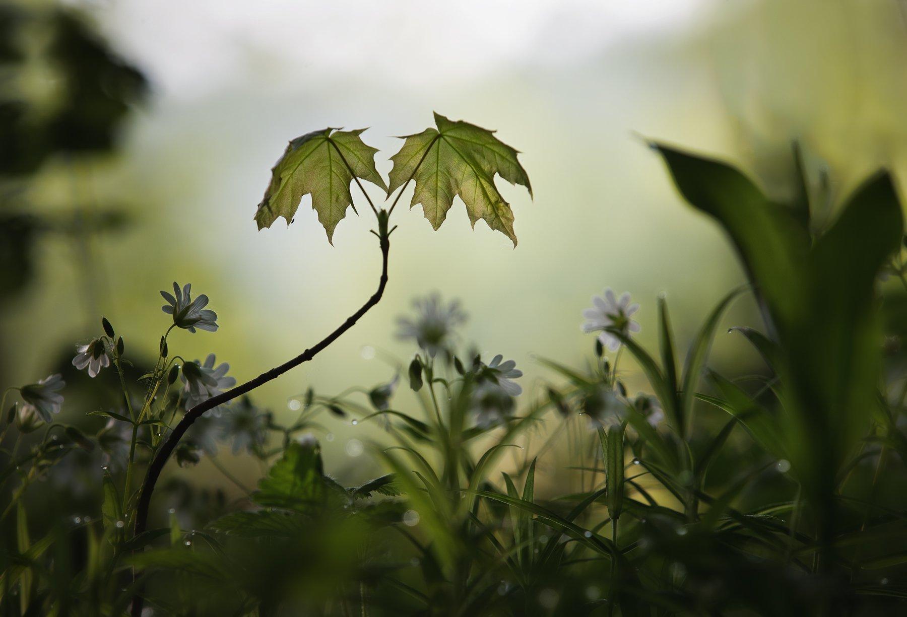лес, свет, утро, природа, Баранов Олег