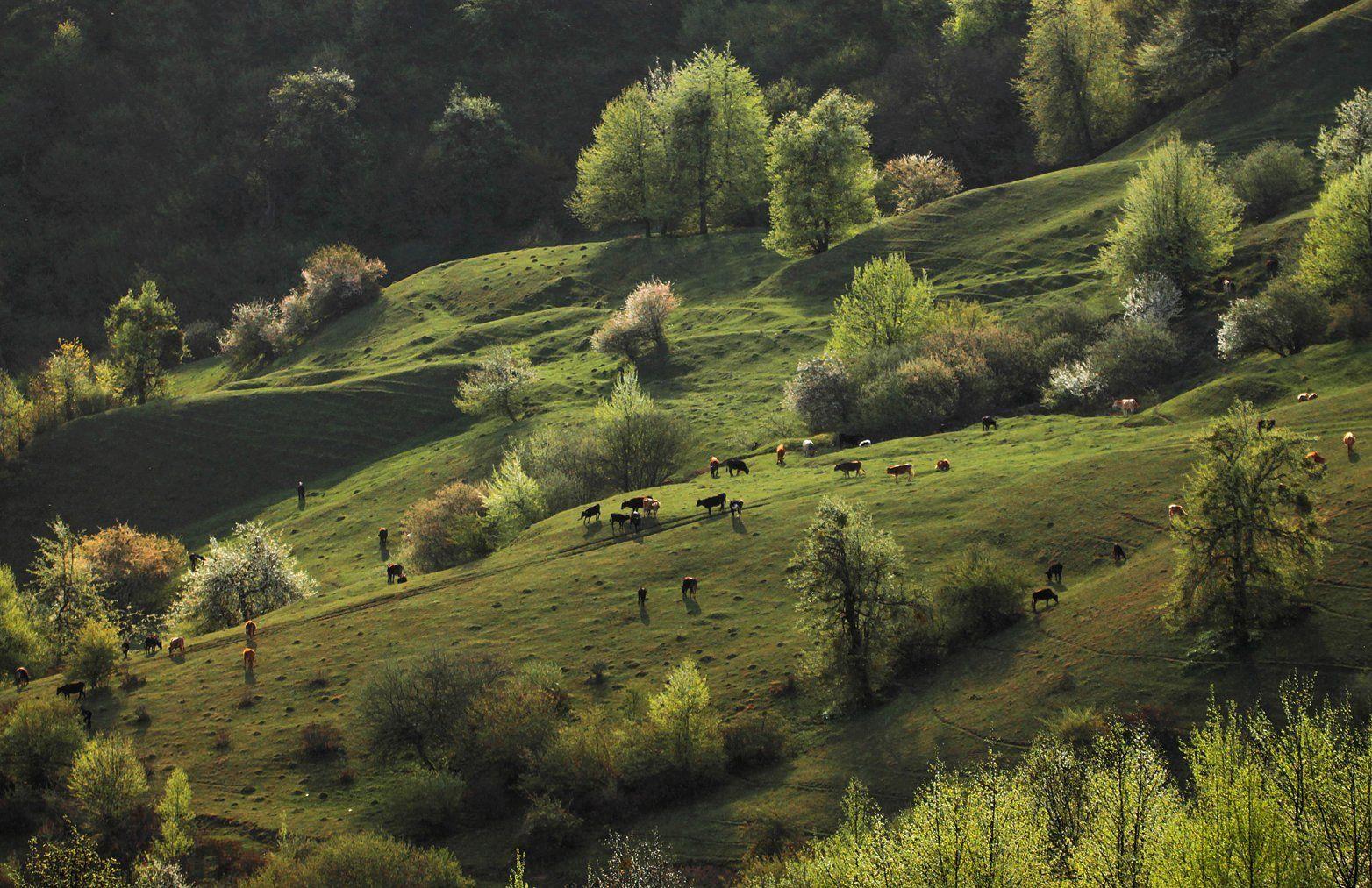 горы,животные,весна,пейзаж,дагестан,, Magov Marat