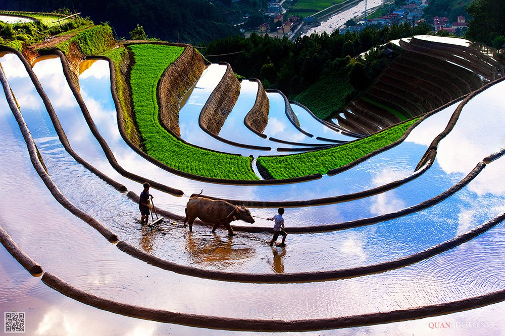 quanphoto, landscape, travel, terraces, farming, farmland, agriculture, father, son, water_buffalo, valley, reflections, culture, vietnam, quanphoto