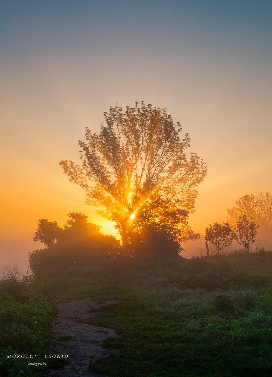#landscape, #nature, #scenery, #forest, #wood, #autumn, #mist, #misty, #fog, #foggy, #river, #waterfall, #longexposure, #mountain, #vitosha, #bulgari, #aтуман, #лес, #oсень, Leonid