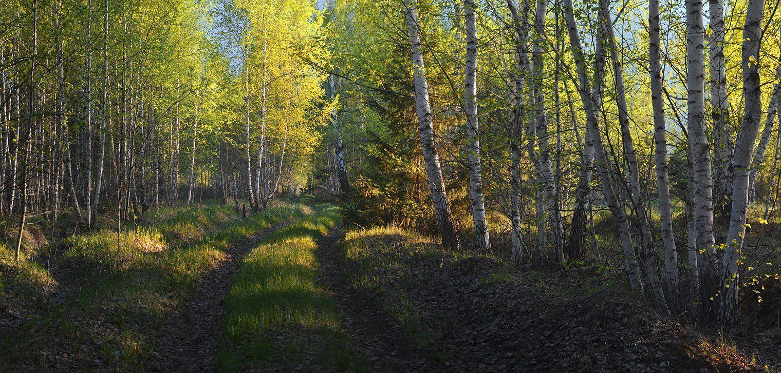 весна, вечер, дорога, лес, солнечный свет, трава, листья, Irina Shapronova