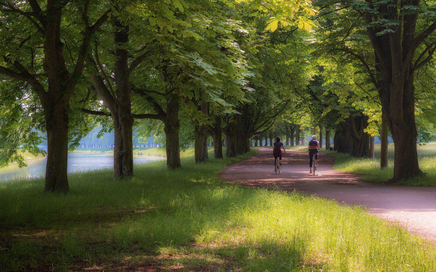парк, дорожка, аллея, прогулка, пара, велосипед, Виктор Климкин