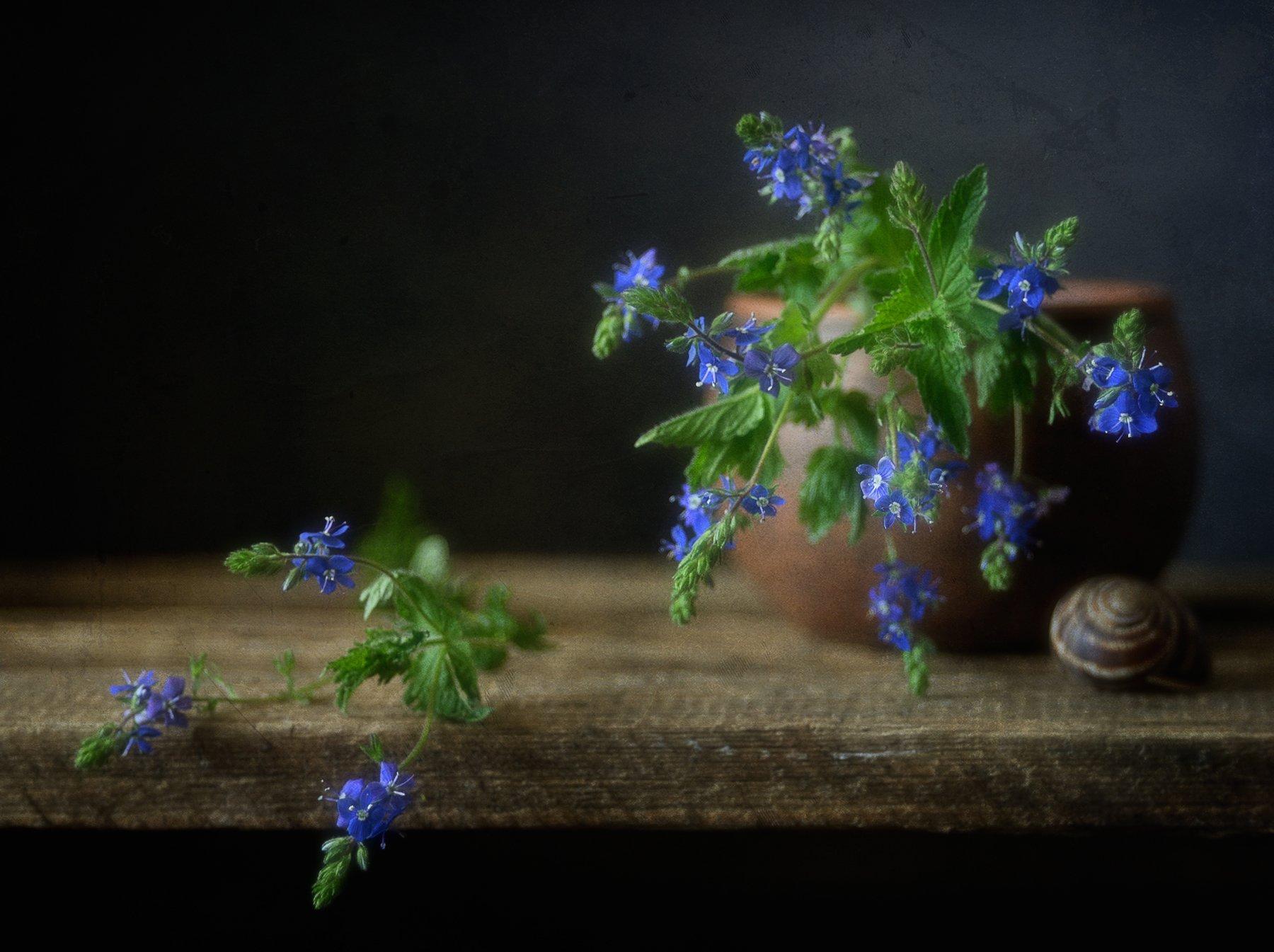 натюрморт,вероника,цветы, Наталия К