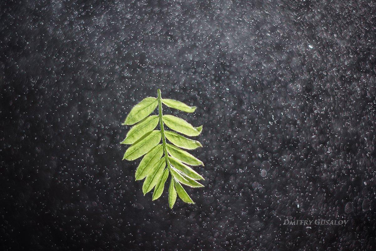 макро, природа, весна, макросъёмка, макрофотография, растение, цветы, листочек, Дмитрий Гусалов