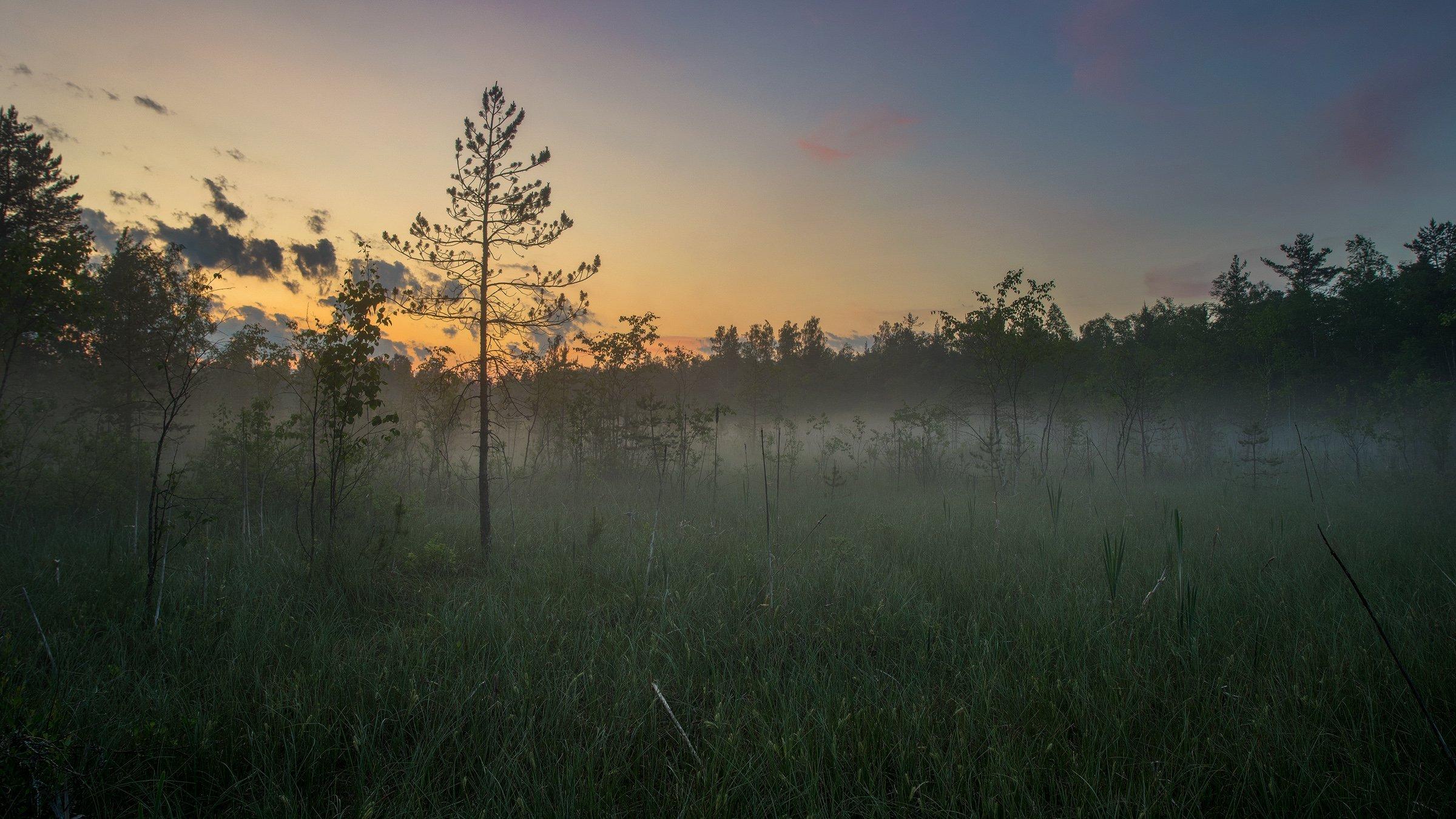 болото, туман, сумерки, Таничев Александр