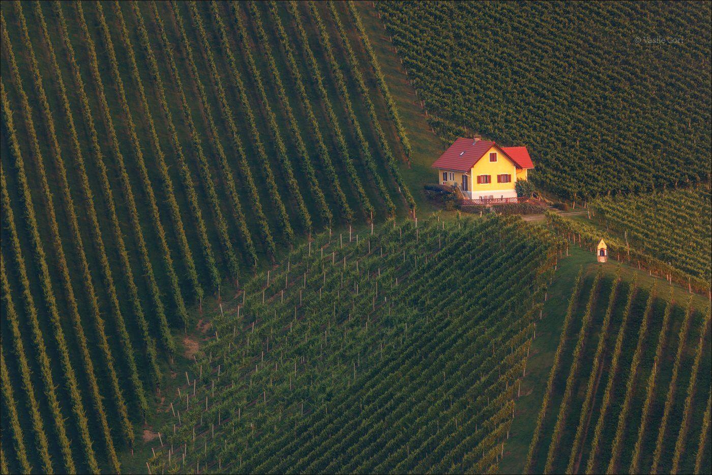 свет,österreich,лето,штирия,домик,австрия,виноградники,gamlitz,sernau,landscape, Василий Гори.