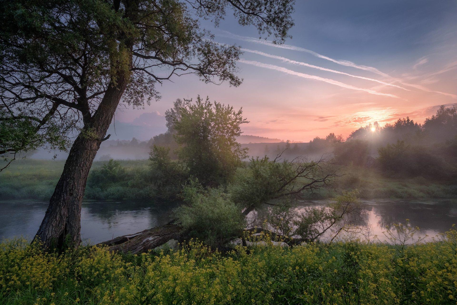истра, река, пейзаж, рассвет, небо, следы, самолеты, трассы, дерево, цветы, туман, утро, Андрей Чиж