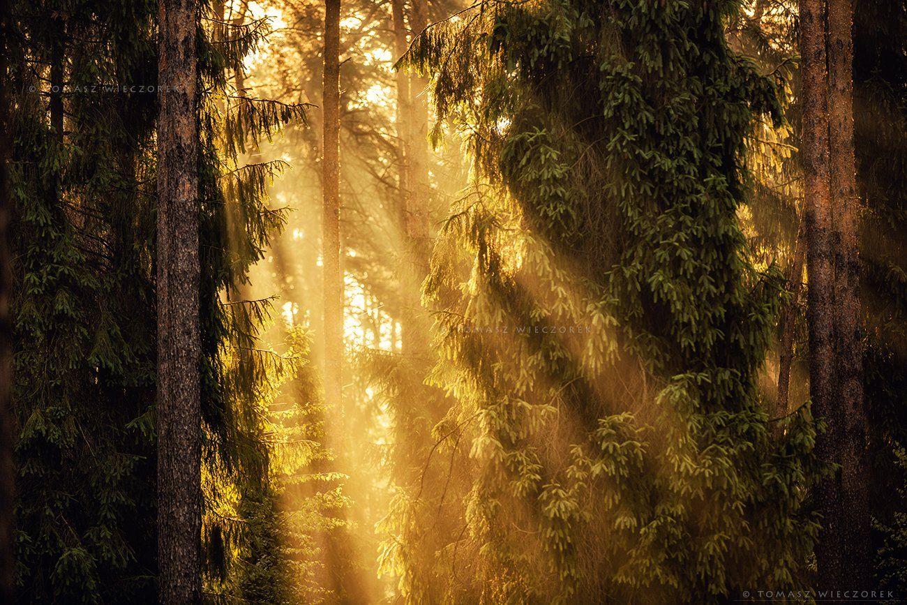 forest, poland, polish, landscape, sunrise, sunset, mood, beautiful, amazing, awesome, adventure, explore, travel, light, trees, Tomasz Wieczorek