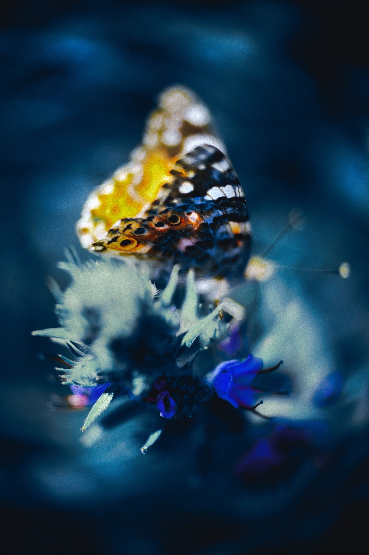 marco, butterfly, bokeh, nature, colors, Руслан Болгов (Axe)