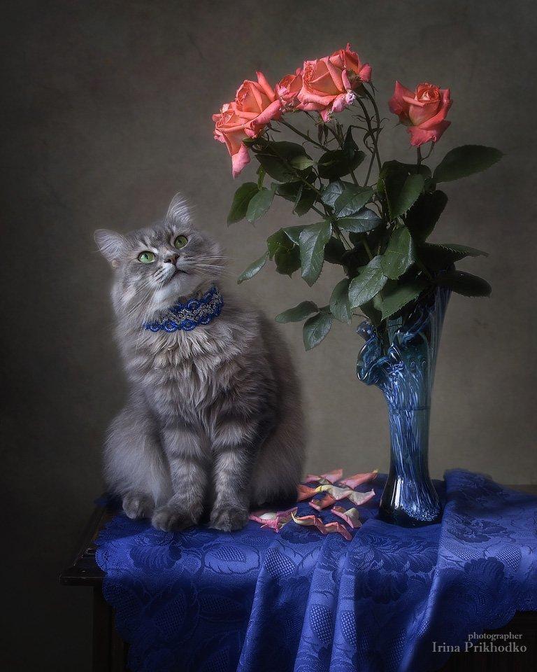 натюрморт, цветочный натюрморт, кошка Масяня, котомодель, домашние питомцы, розы, котонатюрморт, Ирина Приходько