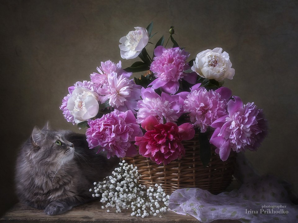 Любуясь прекрасными цветами... Ирина Приходько