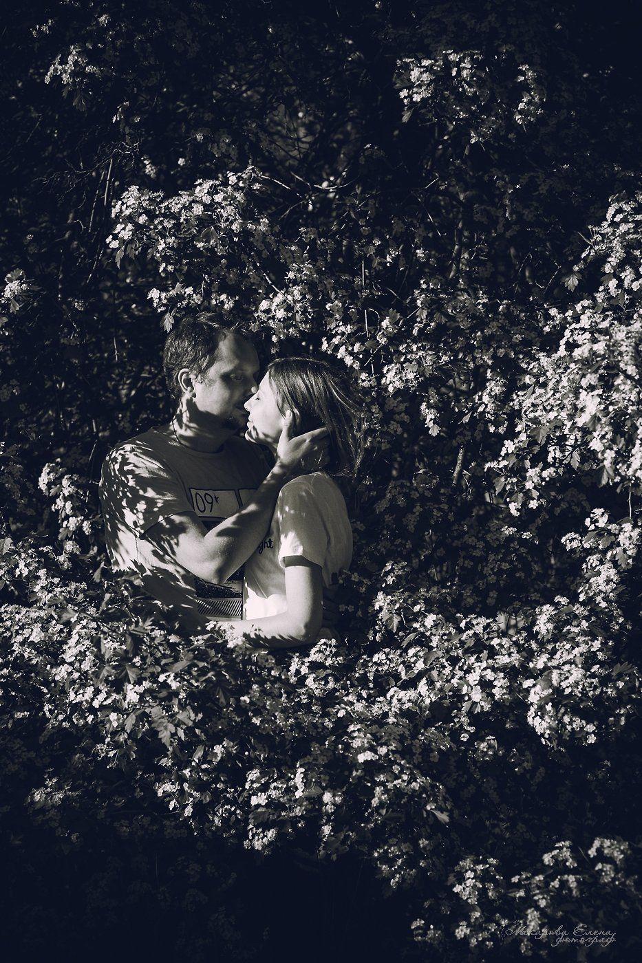 поцелуй, пара, love, kiss, sunlight, blossom, Макарова Елена