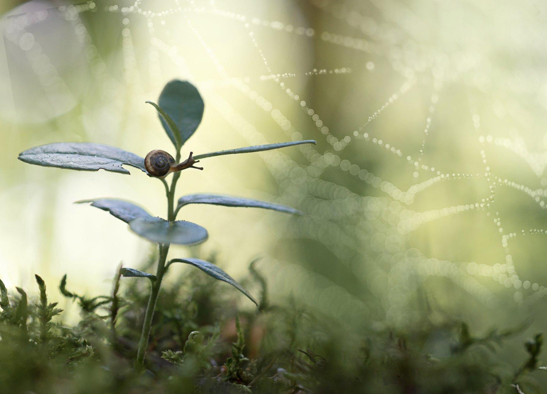 паутинка, улитка, макрокрасота, красота природы, бокешки, Татьяна Пименкова