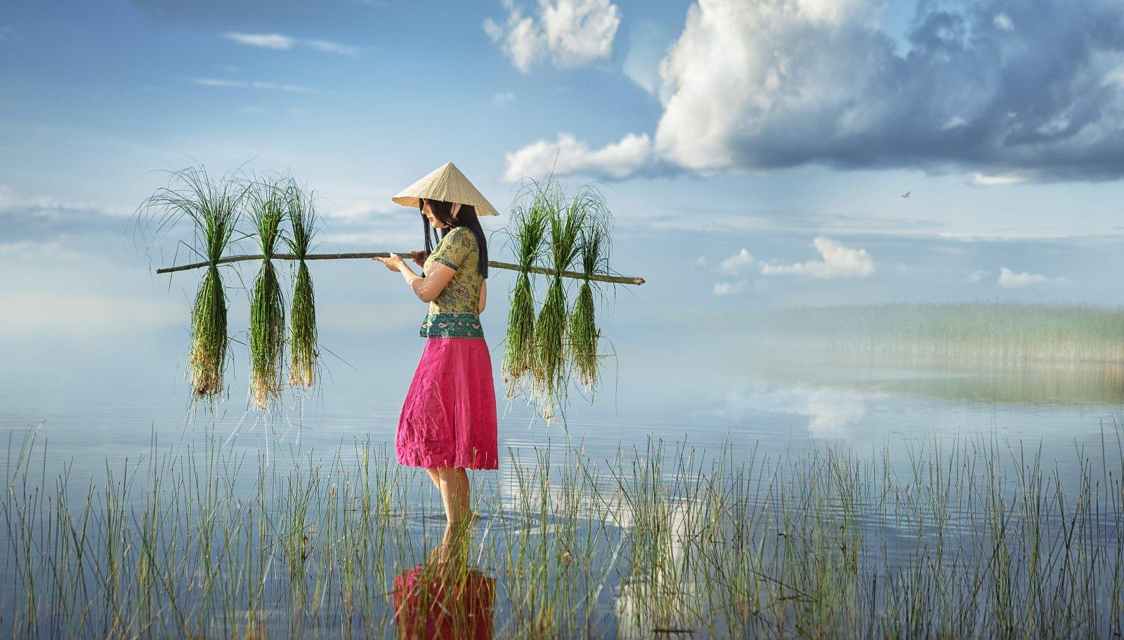 девушка, женский портрет, сборщица риса, поле, вода, вьетнам, азия, трава, шляпа, небо, трава, жанр, постановка, Прядко Наталья