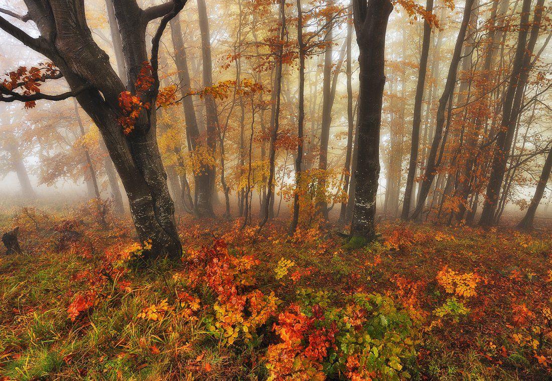 Сказочный лес. Нестерчук Сергей