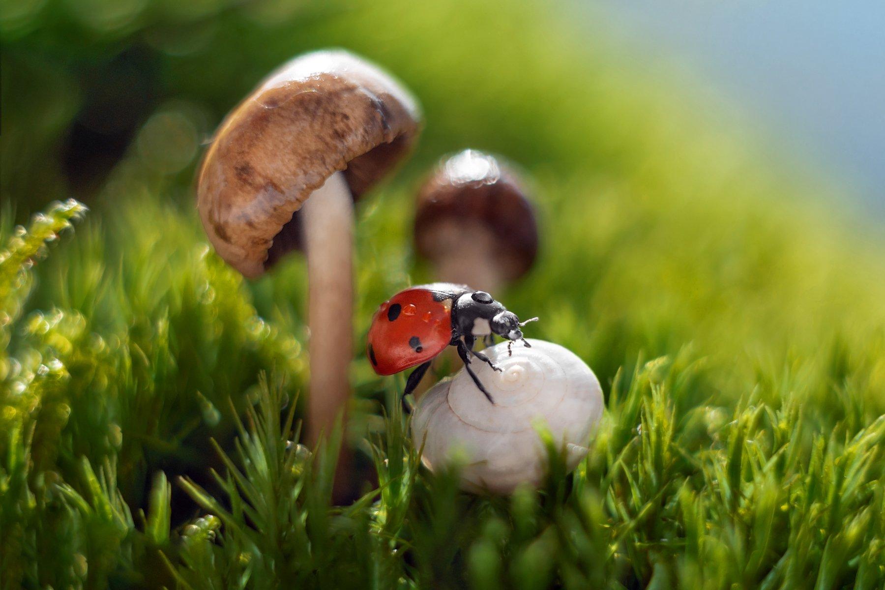 макро, макрофото, улитка, гриб, дождь, лес, природа, капли, никон, сигма, гелиос, macro, macro, snail, mushroom, rain, forest, nature, drops, nikon, sigma, sigma105,, Дегтярёва Анна