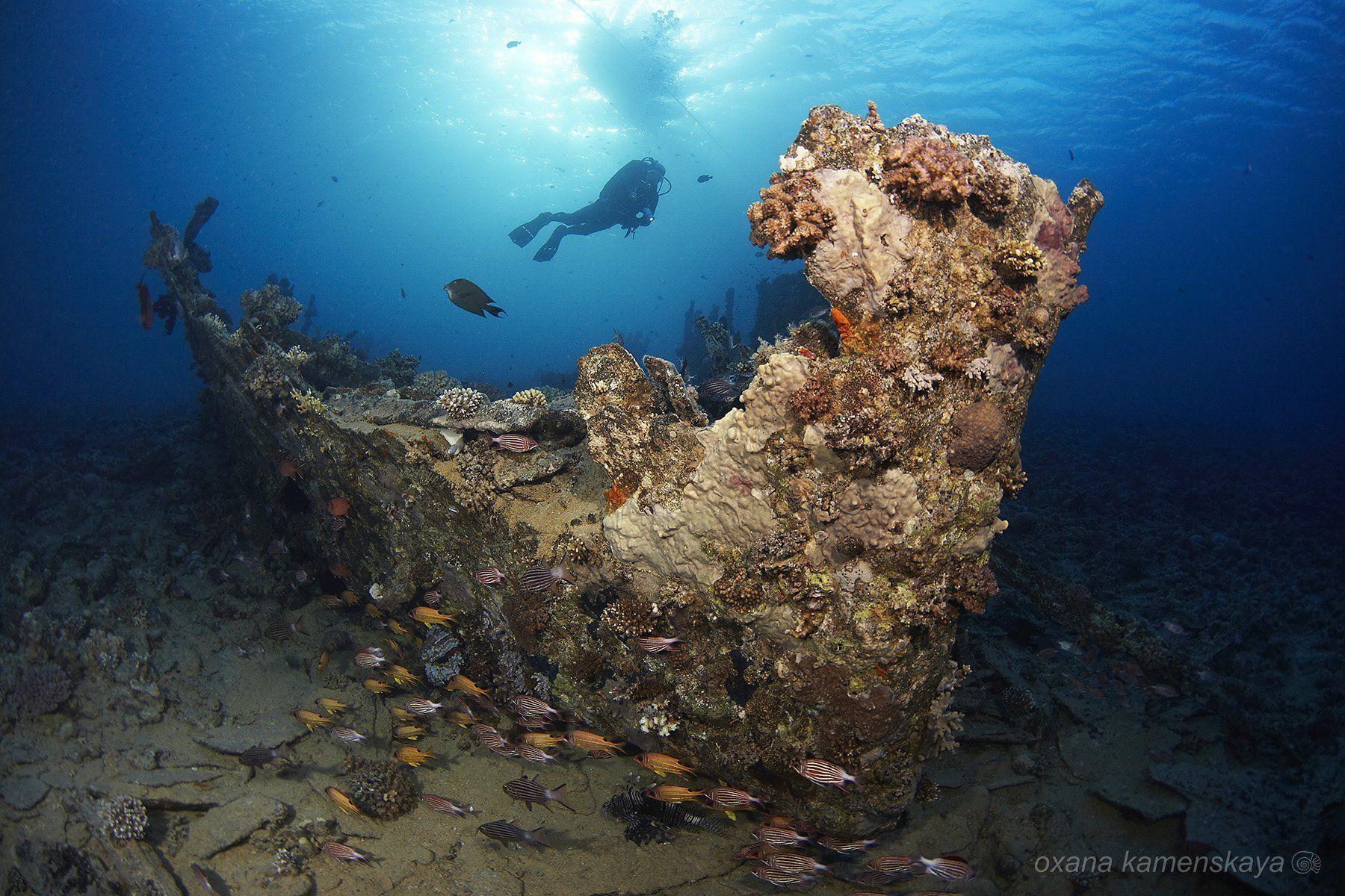 underwater blue fish coral wreck diver, Оксана Каменская